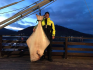 XXl Platte Amberfish Kvalsund