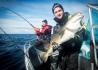Havsfiskeguiden_Vannoya_Dorschangeln
