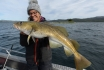 Codfish (7)