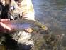 ein klasse Angelfisch