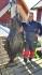 Bolga Brygge 76kg