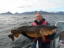 14 kg Dorsch Buvik Brygge