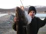 Grossfisch in Dafjord