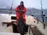 dicker Heilbutt aus Dåfjord von Herrn Rapf