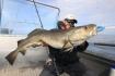 Dönna Fiskeopplevelser toller Dorsch