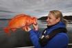 Fischbild_Betty mit Rotbarsch
