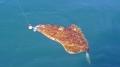 Heilbutt Eidet Havfiske Oberfläche