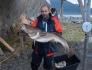 Elgsnes Dorsch 12,5kg