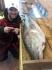 Cod 140cm - 28kg
