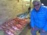 Rotbarsche_Rotsund_Seafishing