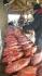 Rotbarschalarm auf Senja in Frovag