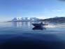 Angelboot in Frovåg auf Senja