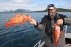 Rotbarsche aus Frovag Havfiske