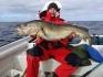 Hasvag Fiske 24 Dorsch satt