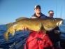Hasvag Fiske 24 Traumdorsch