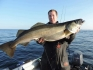 Hasvag Fiske Meterpollack