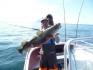 Dorsch auf dem Angelboot