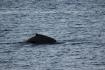 Wal in Lauksletta