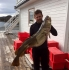 Dorsch 19 kg Leka Brygge