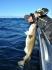 Loppa Havfiske - da wo der Dorsch wohnt