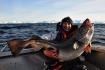 Dorsch 26kg Loppa Havfiske