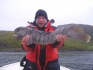 Katfisch in Norwegen