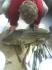 feine Fische