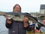 Seelachs Traena Arctic Fishing