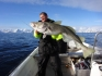 N-Molnarodden-marchfishing-cod124cm-11