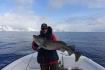 N-Molnarodden-marchfishing-cod-18