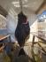 Heilbutt 48 kg Nordskot Brygge