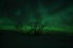 fantastisches Nordlicht am Vestfjorden