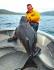Rigvassoy Havfiske Heilbutt 144er