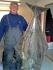 Blog Ringvassoya Petr Bestar 65kg Butt