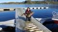 Super Dorsche Roan Sjofiske