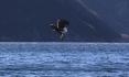 Roan Eagle