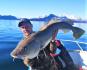 Catch & Release Dorsch Rotsund Seafishing