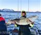 Rotsund Seafishing dicker Dorsch