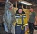 Rotsund Seafishing Heilbutt Lyngen
