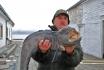 Rotsund Seafishing Stonie