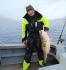 Dorsch satt Rotsund Seafishing