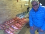 Rotsund Seafishing Rotbarsche