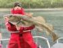 Dorsch auf Dorsch Rotsund Seafishing