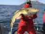 Rotsund Seafishing Dorsche