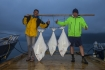 Heilbutte Rotsund Seafishing