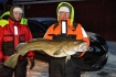 Senja Havfiskesenter guter Dorsch