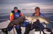 Senja Havfiske Fische - Doublette Heilbutt & Dorsch