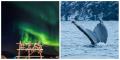 Wale und Nordlicht Storekorsnes