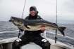 Traena Arctic Fishing Seelachsgranate