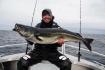 Traena Arctic Fishing Seelachsgranate